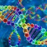 Analisis DNA Terbesar yang Pernah Ada Mengungkap Mitos 'Gen Gay'