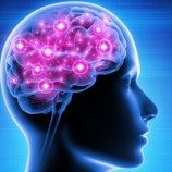 Individu Homoseksual dalam Tes Neurokognitif